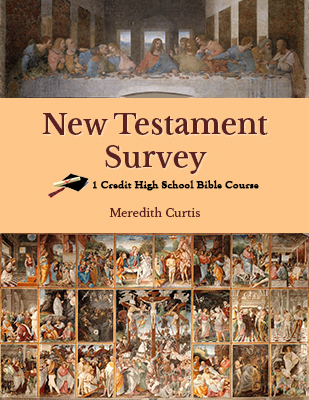New Testament Survey by Meredith Curtis