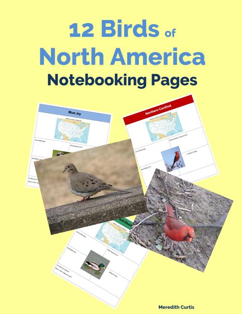 12 Birds of North America Notebooking Pages by Meredith Curtis