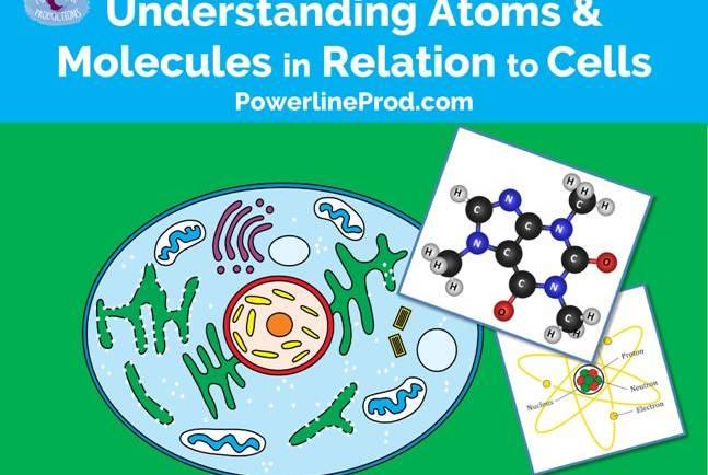 Understanding Atoms & Molecules in Relation to Cells