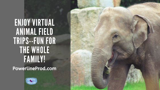 Enjoy Virtual Animal Field Trips–Fun for the Whole Family!